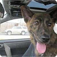 Adopt A Pet :: Sonia - Alexandria, VA