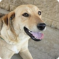 Adopt A Pet :: Betty - Stilwell, OK