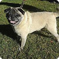 Adopt A Pet :: Oscar - Walled Lake, MI