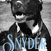 Pit Bull Terrier Mix Dog for adoption in Cheney, Kansas - Snyder