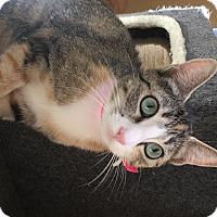 Adopt A Pet :: Carol - Chula Vista, CA
