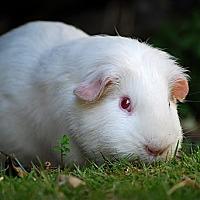 Adopt A Pet :: Ranch and Potato - Marlton, NJ