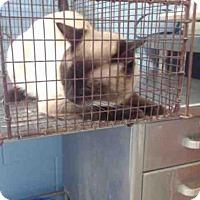 Adopt A Pet :: A506140 - San Bernardino, CA