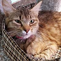 Adopt A Pet :: Alice 27217 - Prattville, AL