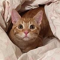 Adopt A Pet :: Callaghan - Mesa, AZ