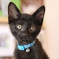 Adopt A Pet :: Wolfgang - Pacific Grove, CA