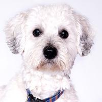 Adopt A Pet :: Tito - Chicago, IL
