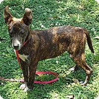 Adopt A Pet :: Isham - Staunton, VA