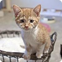 Adopt A Pet :: Mars - Grand Rapids, MI