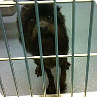 Adopt A Pet :: Nova - Phillips, WI