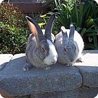 Adopt A Pet :: Crystal - Santee, CA