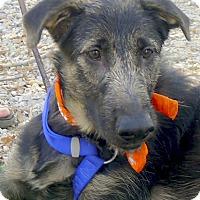 Adopt A Pet :: Bella adoption PENDING - Sacramento, CA