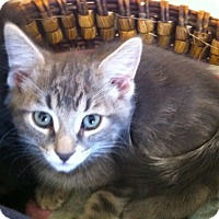 Adopt A Pet :: Morrison - Toronto, ON