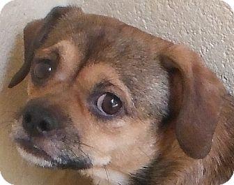 Terrier (Unknown Type, Small)/Pug Mix Puppy for adoption in Cedartown, Georgia - 28145956
