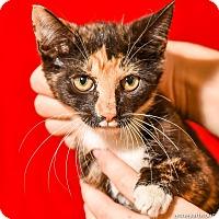 Adopt A Pet :: Gracie - Athens, GA