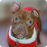 Adopt A Pet :: Phoenix - Snellville, GA