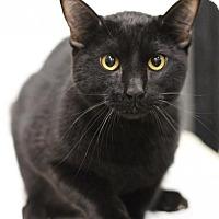 Adopt A Pet :: Jakeup - Sacramento, CA