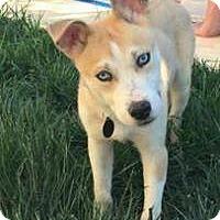 Adopt A Pet :: Walker! - Sacramento, CA