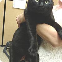 Adopt A Pet :: Mr. Teddy - Colmar, PA