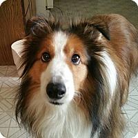 Adopt A Pet :: Cody - Circle Pines, MN