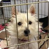 Adopt A Pet :: Lucy - Omaha, NE