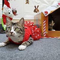 Adopt A Pet :: Kitcat - Pasadena, CA