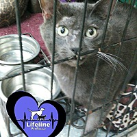 Adopt A Pet :: George - Huntsville, AL
