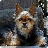 Adopt A Pet :: Urkel - Harrisburg, PA