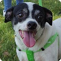 Adopt A Pet :: Big Buster - Grayslake, IL