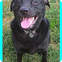Adopt A Pet :: Luke the Second - Jasper, IN