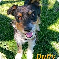 Adopt A Pet :: Duffy - El Cajon, CA