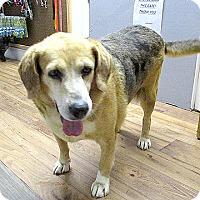 Adopt A Pet :: 17-d07-007 Maudey - Fayetteville, TN