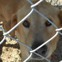 Adopt A Pet :: Yellow - Opelousas, LA