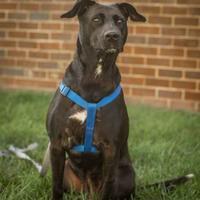 Adopt A Pet :: Marina - Waldorf, MD