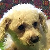 Adopt A Pet :: MELODY - Rossford, OH
