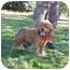 Photo 2 - Cocker Spaniel Dog for adoption in Riverside, California - Tammy