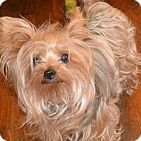 Adopt A Pet :: Patty - Greensboro, NC