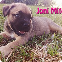 Adopt A Pet :: Joni Mitchell - Houston, TX
