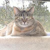 Adopt A Pet :: Mae - Sparta, WI