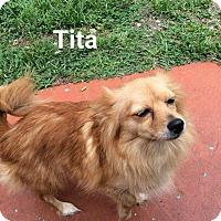 Adopt A Pet :: Tita - Pembroke pInes, FL