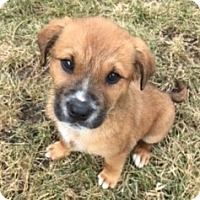 Adopt A Pet :: Baxter - Schaumburg, IL