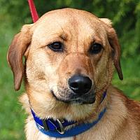 Shepherd (Unknown Type) Mix Dog for adoption in Waynesville, North Carolina - O'Nellie