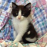 Adopt A Pet :: Henry Higgins - Larned, KS