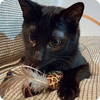 Adopt A Pet :: Eddie - At Adoption Center - Frankfort, IL