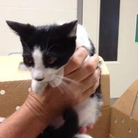 Adopt A Pet :: Jeremy - New Port Richey, FL