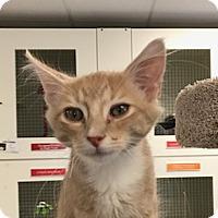 Adopt A Pet :: Bobby - San Leon, TX