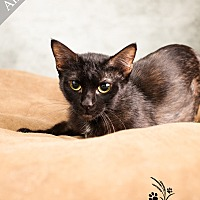 Adopt A Pet :: Angel *$20 Fee 8/2 - 8/31* - Ottawa, KS