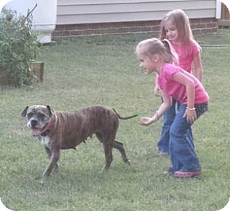 Boxer Mix Dog for adoption in Turnersville, New Jersey - Sasha-3/2 Weigh In Update