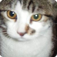 Adopt A Pet :: Summer - Kensington, MD