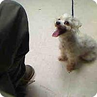 Adopt A Pet :: Blizzard - Antioch, IL
